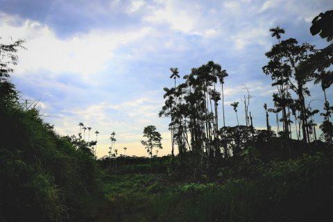 Congé Solidaire Equateur - En moins de deux