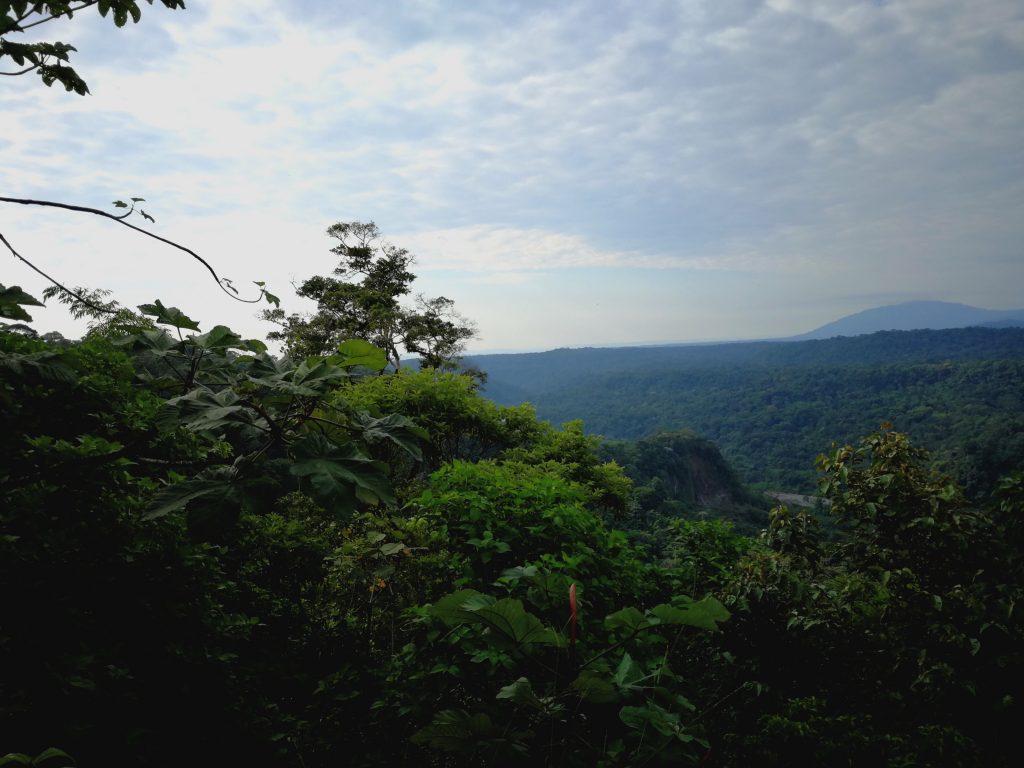 Congé Solidaire Equateur - En moins de deux - Fôret amazonienne
